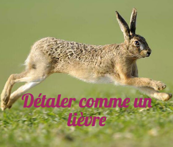 10 Funny French Idioms with Animals - French Studio - French